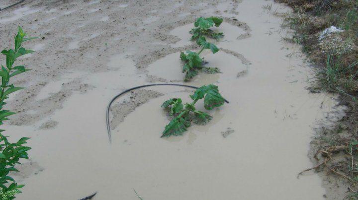 Inundación. Las hojas apenas sobresalen entre el agua acumulada.