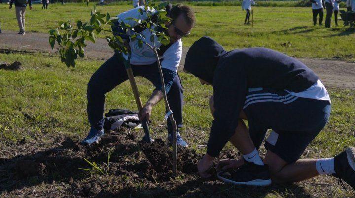 Nueva sombra. Voluntarios plantaron los árboles de especies nativas.