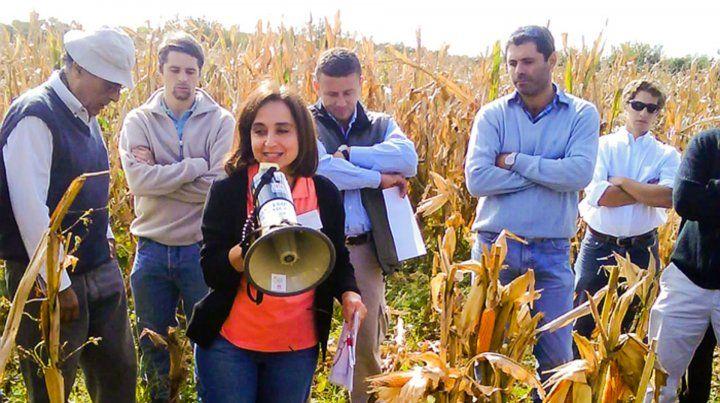 Control. Los investigadores hacen un nuevo aporte a la sanidad del cultivo.