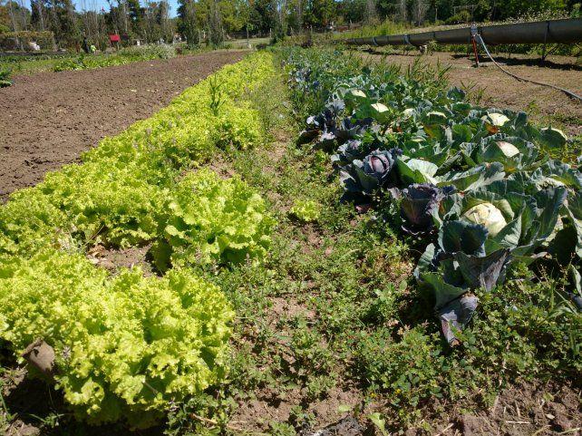 Suma. Argentina cuenta con 1.157 operadores de producciones orgánicos.