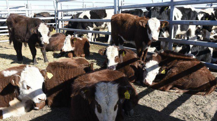 En venta. AFA llevó adelante tres exitosos remates en la muestra de Agroactiva.