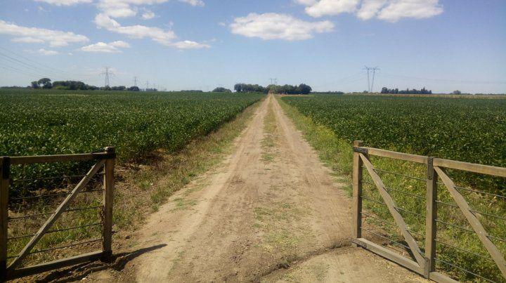 Proyección. La producción total de granos sería de 120 millones de toneladas.