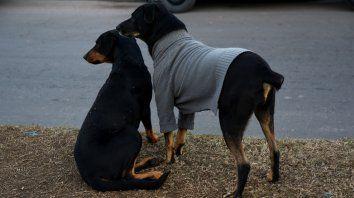 El invierno llegó. Pero hoy no será necesario tanto abrigo.