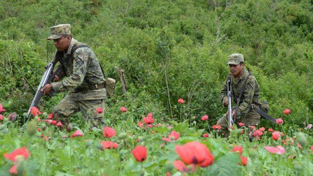 Lucha sin fin. Soldados mexicanos recorren un campo de amapola en las sierras de Guerrero.