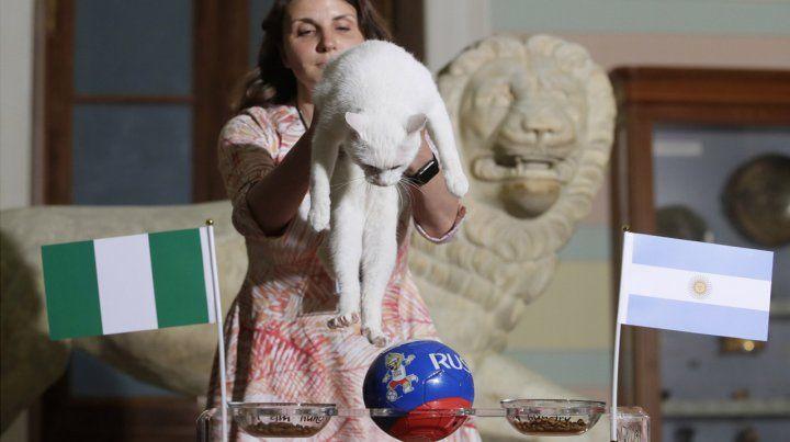 La mascota hizo su pronóstico eligiendo entre dos platos de comida.
