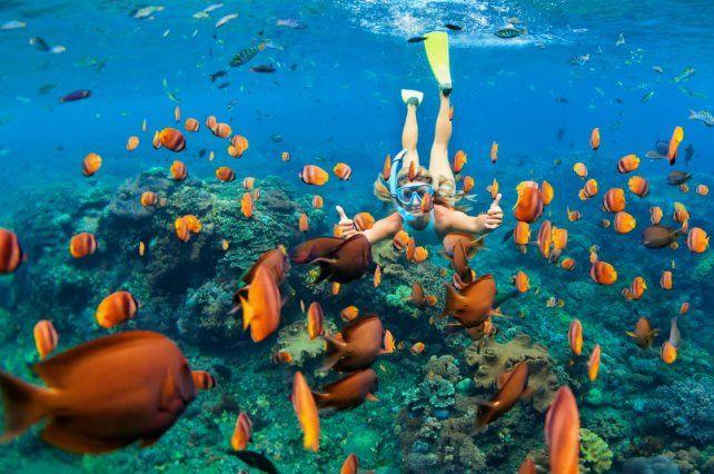 Hacer snorkel en la isla de Bonaire permite ver las distintas especies acuáticas.