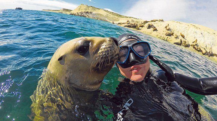 Experiencia inolvidable. El buceo con lobitos marinos se puede hacer durante todo el año en la reserva Punta Loma.