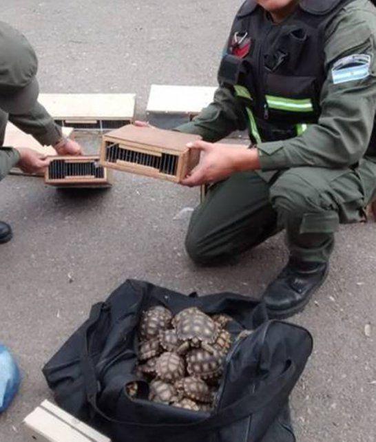Rescatan aves y tortugas que eran transportadas ilegalmente en un camión