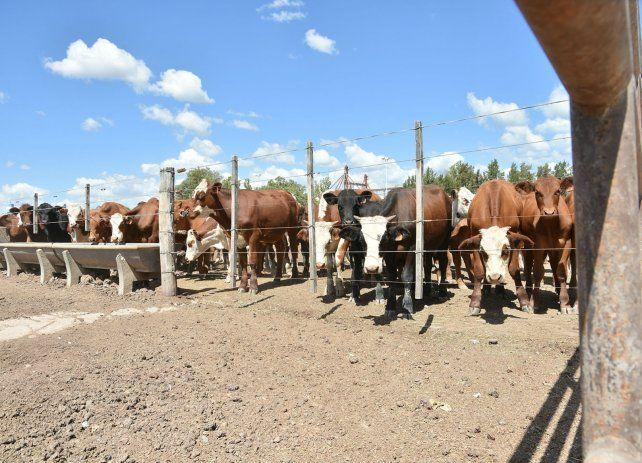 Futuro. La ganadería tiene grandes oportunidades a nivel global.