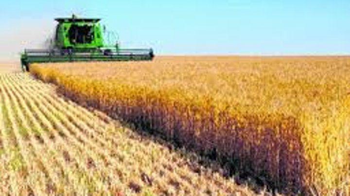 Entre los cultivos que más verían incrementar su superficie de implantación se destacan: el trigo ( 12%).