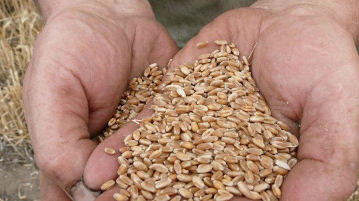 El ciclo 2018/2019 del cultivo de trigo apunta a superar por casi 2 millones de toneladas a su mayor marca registrada en la campaña 2016/2017.
