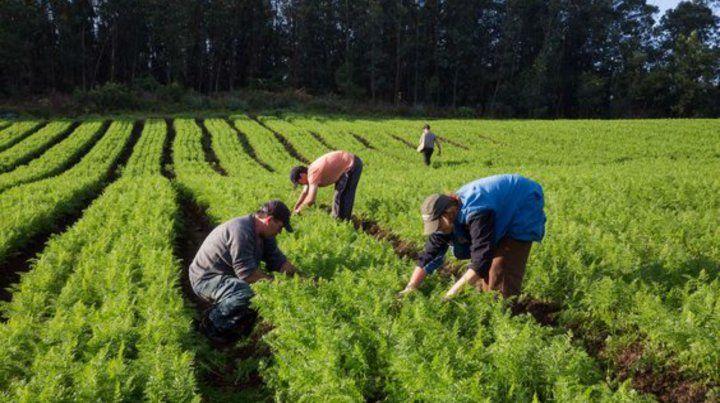 Campo pobre. El plan ayudaba a pequeñas unidades agroecológicas.
