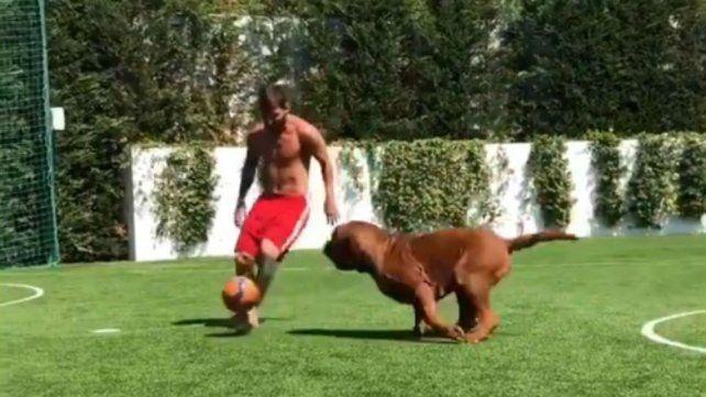 Messi vuelve loco a su mascota y le tira sombreritos