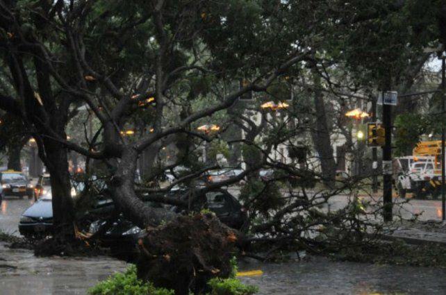 Temporal. Los fuertes vientos derrumbaron árboles en las avenidas de la ciudad.