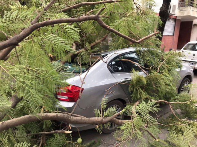 Un árbol cayó sobre un Honda City en Montevideo y Necochea.