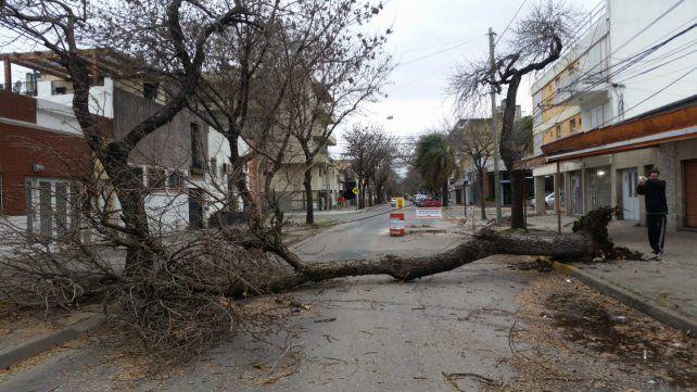 Virasoro al 2000, otro árbol caído.