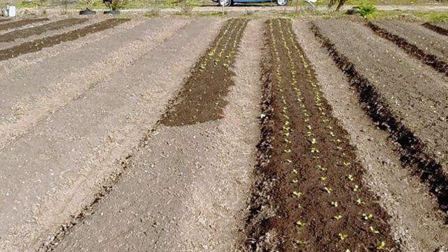Producción. La comuna sostiene en cuatro hectáreas la Eco Huerta.
