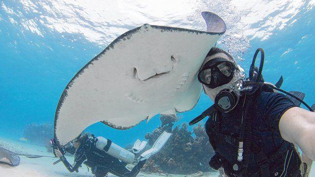 Amigables. Stingray City fue nombrada por National Geographic como la inmersión de cuatro metros más emocionante del mundo. El encuentro con enormes rayas es constante.