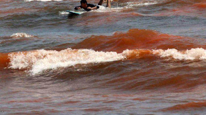 La marea roja mata a miles de peces en Florida