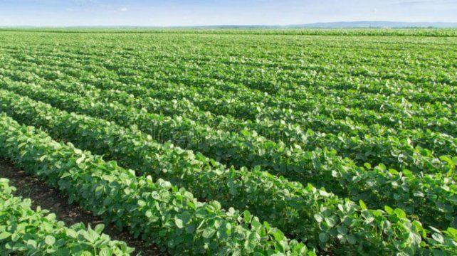 Soja. Los herbicidas podrían llegar al 40% del costo de implantación.