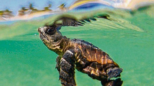 Experiencia con tortugas marinas