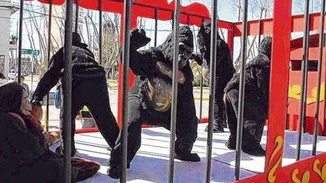 Enjaulados. Los gorilas eran personas disfrazadas