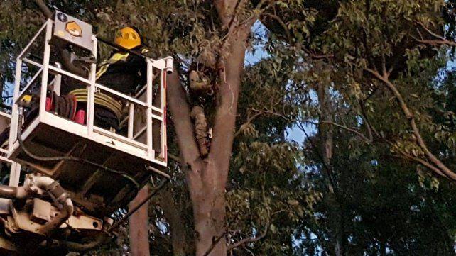 Una paracaidista del Ejército quedó atascada en un árbol