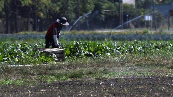 Trabajo en la tierra. Huertas agroecológicas en los barrios Santa Lucía
