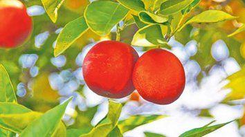 El olor de las naranjas, un texto que invita a resistir desde el amor
