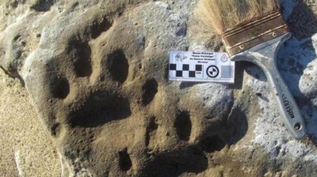 Miramar. El tigre dientes de sable habitó gran parte de América.