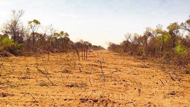 Tierra arrasada. El avance de la agricultura generó un proceso intensivo de desmonte en la región del Chaco Semiárido.