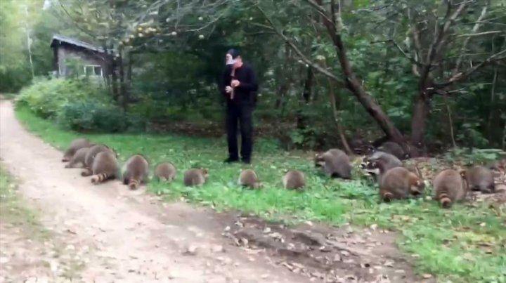 El increíble video de El flautista de Hamelín de los mapaches