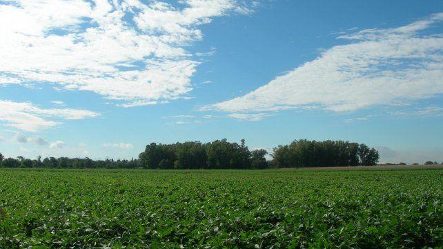 Campaña. La producción sojera se estancó en los últimos años. En esta cosecha tiene una nueva oportunidad.