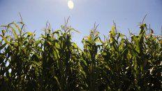 Cambio. La falta de condiciones influye y la soja le gana a la siembra tardía del maíz.