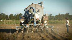 Fertilización. El sistema de El Trébol redujo el costo de fertilizantes.