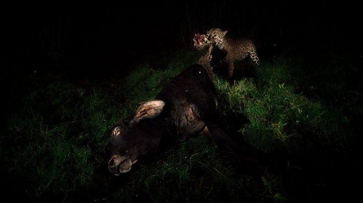 Imágenes ganadoras del premio Fotógrafo de Vida Silvestre 2018