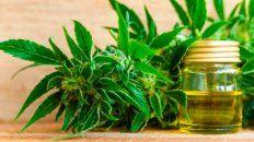 Revocan autorización a una madre a cultivar cannabis para su hijo