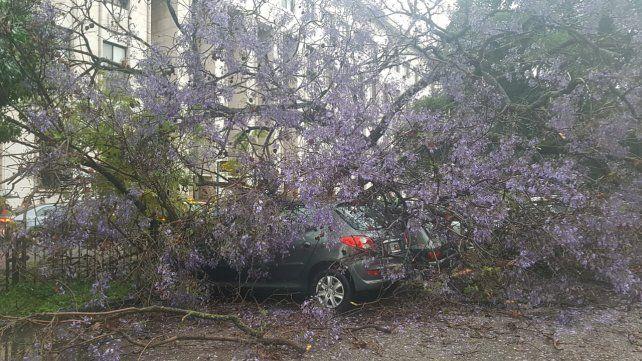Cinco vehículos fueron aplastados por un árbol frente a Tribunales