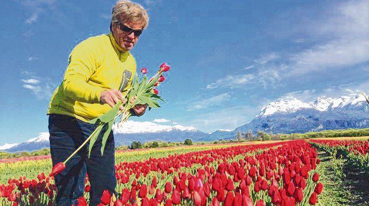 Alfombra mágica. Las filas de tulipanes están separadas por más de un metro