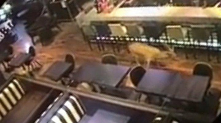 El ciervo rompió un vidrio e ingresó a Johnny B. Good en plena madrugada.
