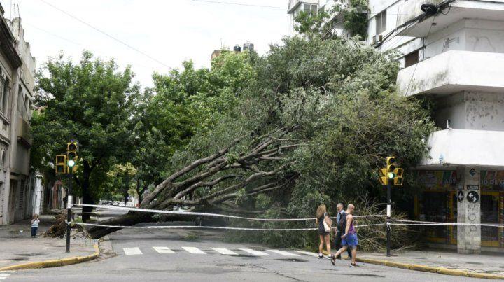 Un árbol cayó sobre la calle e impide el paso en Dorrego y Pellegrini.