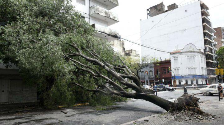 Las fuertes ráfagas de viento provocaron daños en distintas zonas de la ciudad