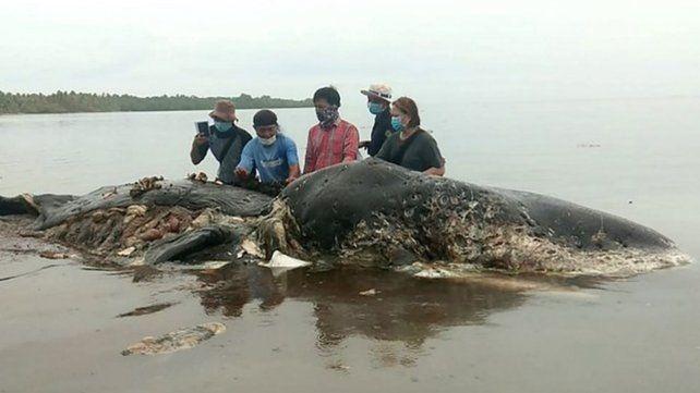 Encontraron 115 vasos de plástico en el estómago de una ballena muerta