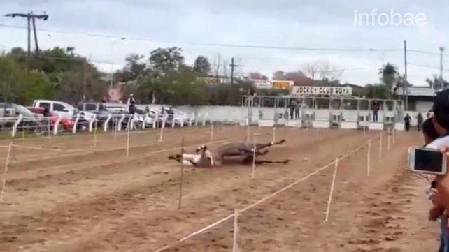Falta de mérito para Pepe Sand por la muerte de una yegua en una carrera ilegal