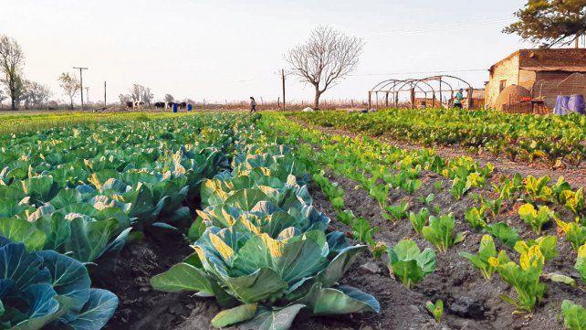 Las huertas son una alternativa para que en una zona de 1.500 metros desde el límite urbano se realice la producción orgánica.