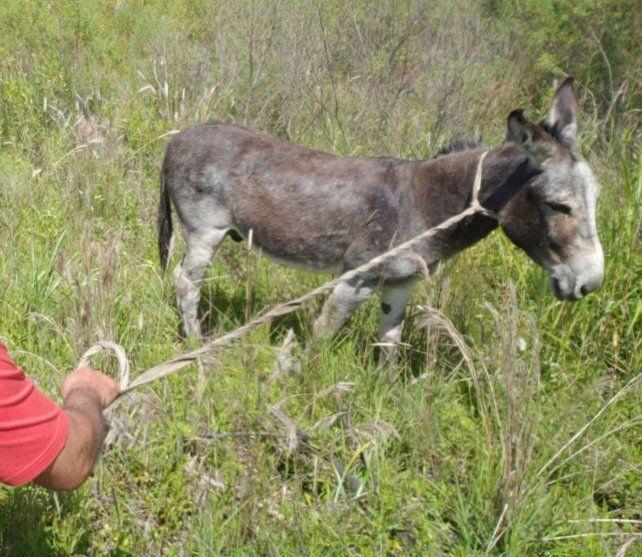 Juanchi fue encontrado en las inmediaciones del barrio Tío Rolo.