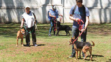 Labor solidaria. Los paseadores trabajan en la rehabilitación de los animales en cautiverio.