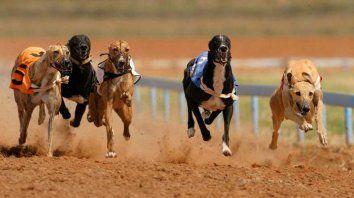 Prohibido. La ley nacional 27.330, sancionada en 2016, castiga con penas de cárcel y multas quien realice, promueva u organice carreras de perros de cualquier raza.