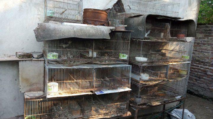 Secuestran 116 aves en cautiverio en la localidad de Ricardone