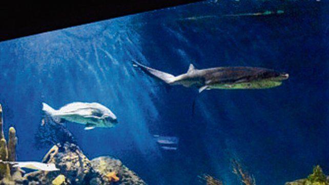 Una noche con los tiburones